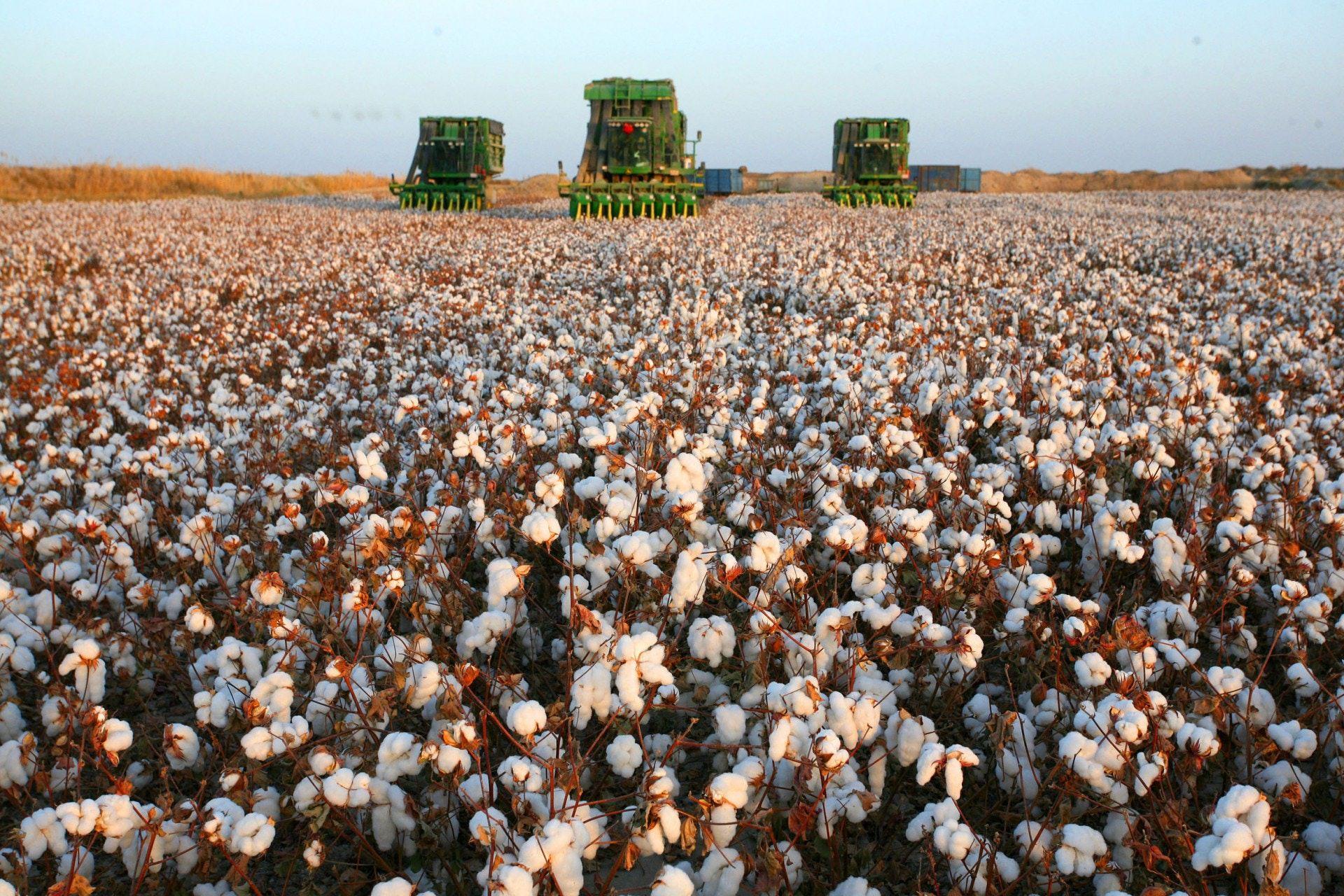 近期最猛軟大宗商品:美國棉花期貨價格創十年新高
